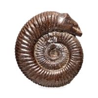 Headless Snake Carving