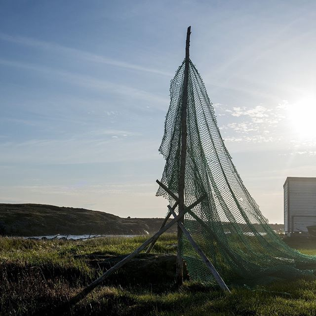 Summer solstice reminds us of the approaching end of Trap Berth season on Fogo Island; as do calmer seas, flourishing wildflowers, and landscapes lush with green.⠀ ⠀ #summersolstice #fogoisland #trapberthseason