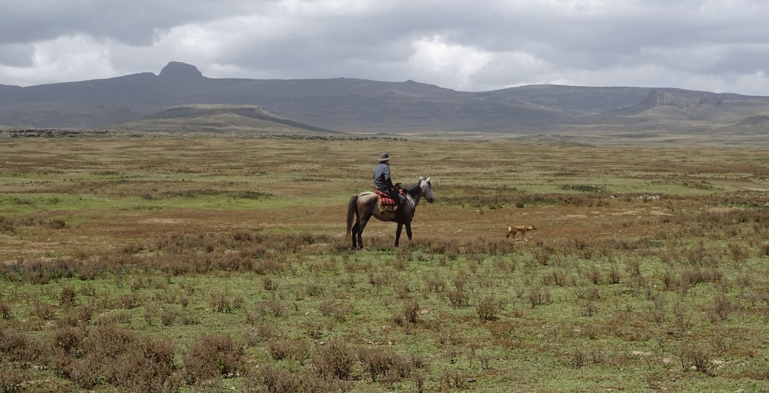 Bale-Mountains-Ethiopia-Horses.png