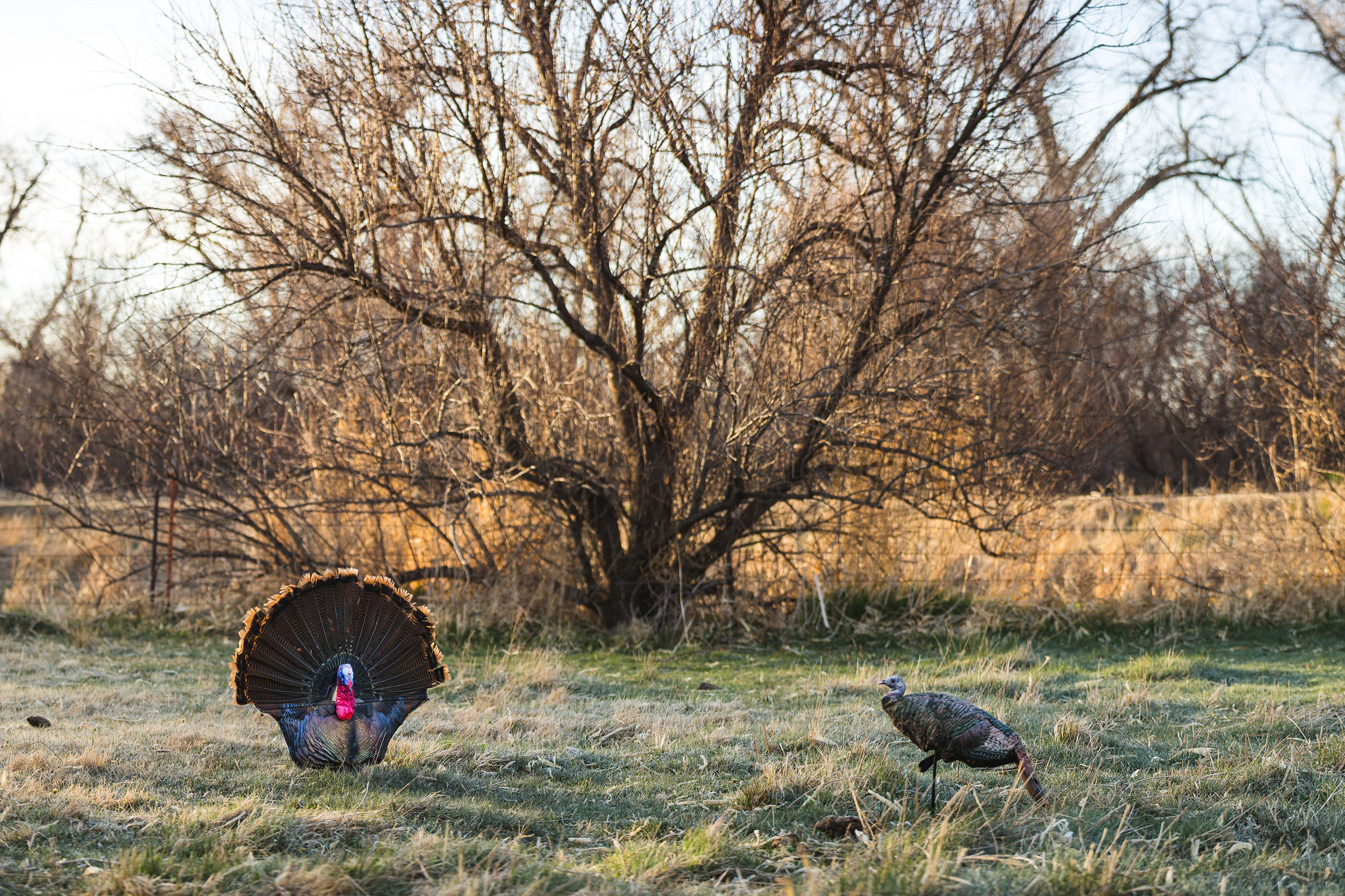 Outback Outdoors - NE Youth Turkey - 2018