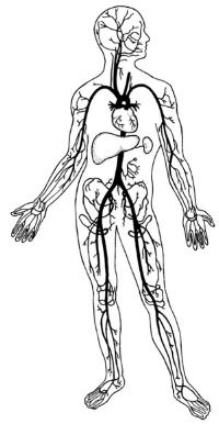 human-body-system.jpg