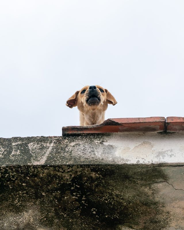 Woof! . www.cubaphototravel.com Engage l Explore l Capture Follow: @cubaphototravel / Tag: #cubaphototravel . . . . . . . #Cuba #loves_cuba #havana #photographyislife #getlost #keepexploring #theglobewanderer #exploretheworld #neverstopexploring #travelstagram #letsgosomewhere #roamtheplanet #welltravelled #justbackfrom #chasinglight #openmyworld #bestvacations #travelstoke #travelphotographer #traveldeeper #welltravelled #stayandwander