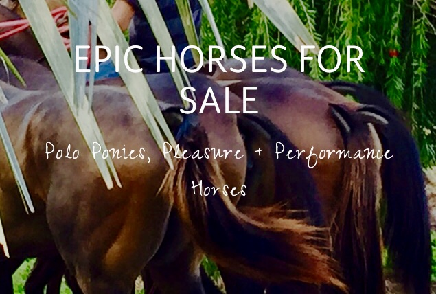Epic Horses for Sale