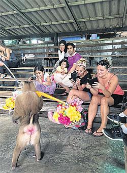 Image Courtesy of Bangkok Post