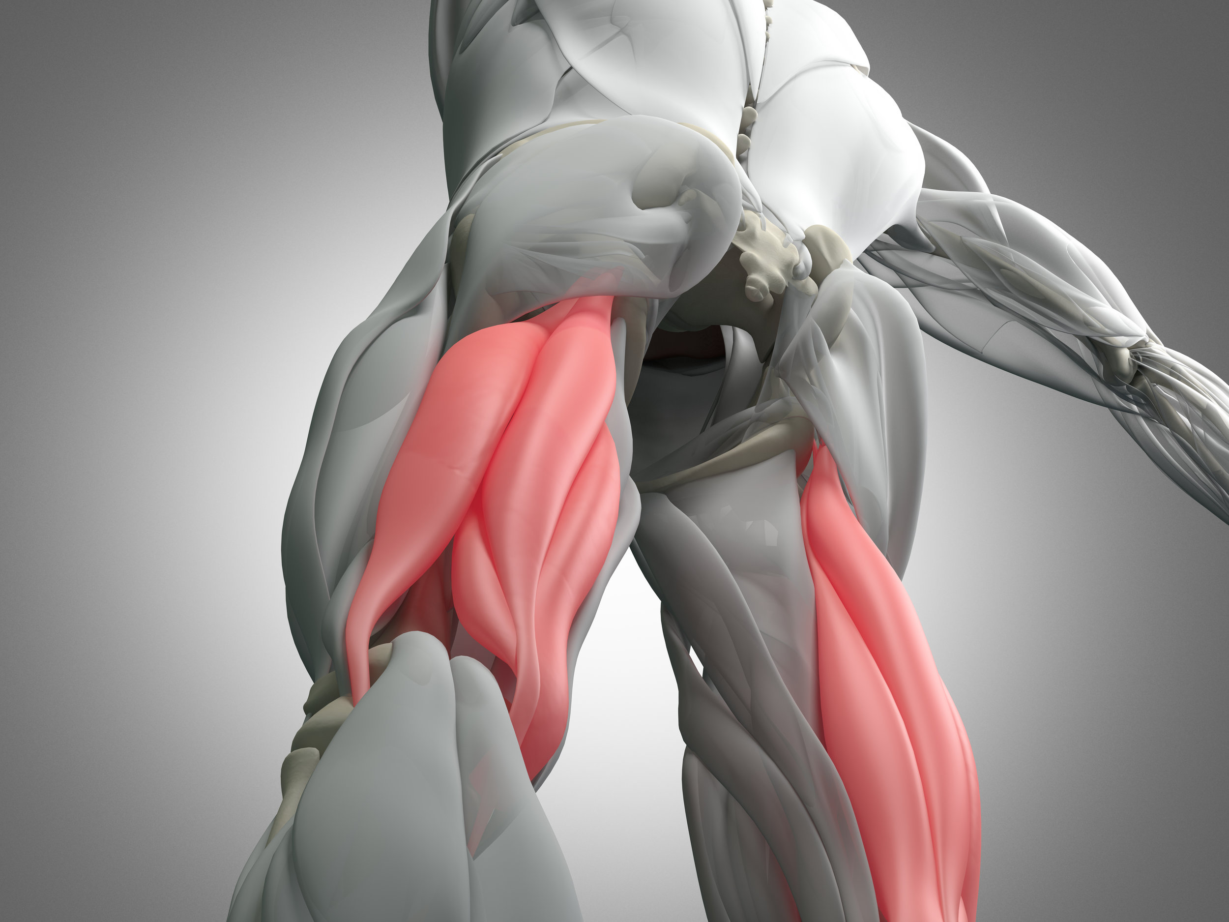 Hamstring Hero  Everything to know to be a Hamstring Hero - -Diagnostic and Prognosis Tips-Progressive Week by Week Rehabilitation Plans-Safe Return to Sport After a Hamstring Injury-Hamstring Injury Prevent-Strength and Conditioning Tips