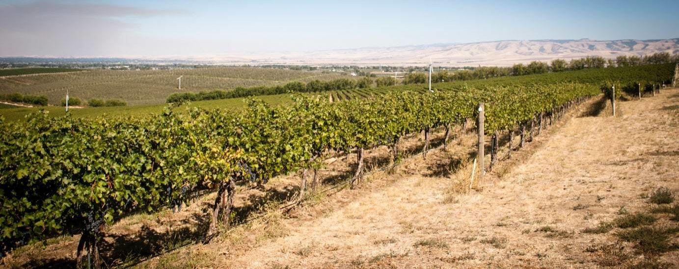 Reininger vineyard.jpg