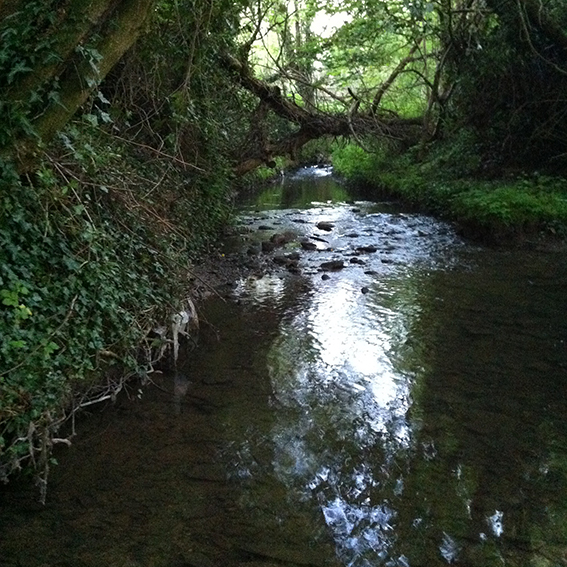 The Pudding Brook, looking downstream.