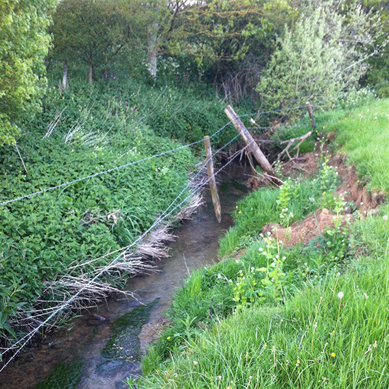 The Pudding Brook, its bank eroded.