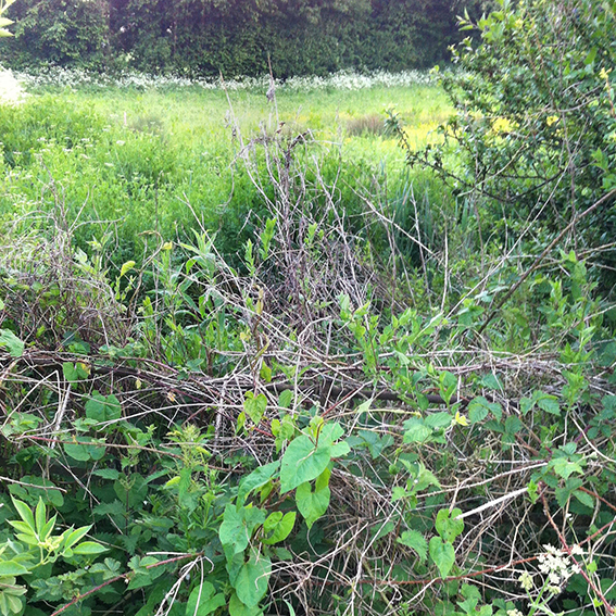 The overgrown pond at Stowell Farm crossroads.