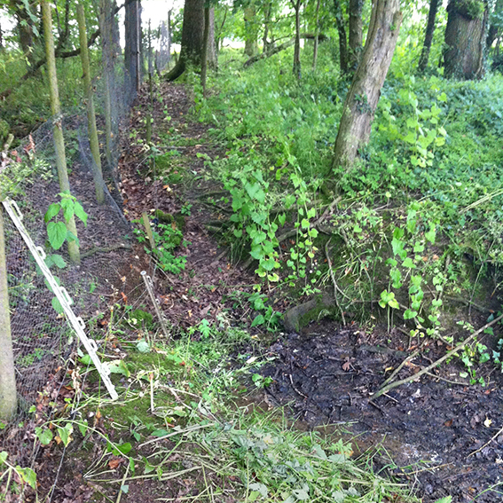 The course of the stream which emerges from beneath the fence in the copse before flowing downhill.