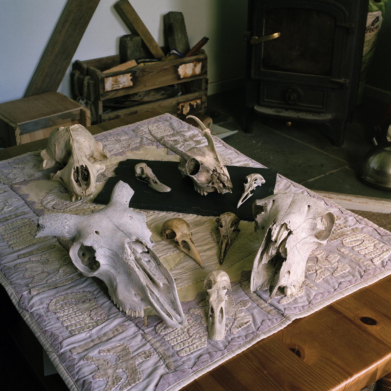 41 Skulls 2.jpg