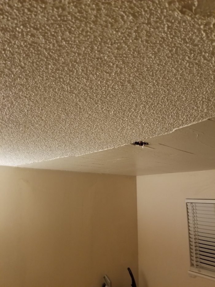 popcorn ceiling removal - smooth ceilings process | Custom Drywall Vancouver