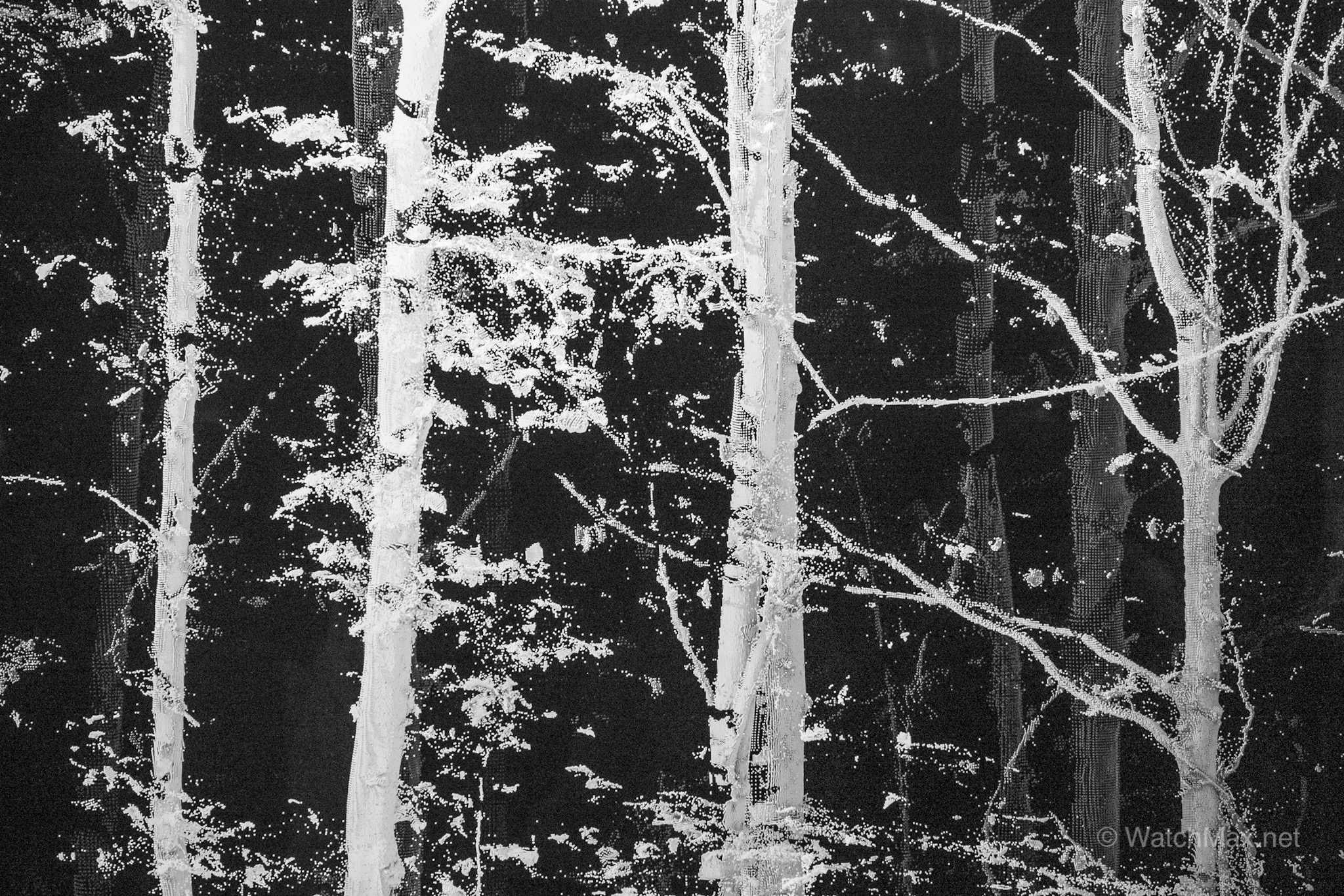 Snapshot of Quayola's video, piercing into the heart of the Vallée de Joux's forests