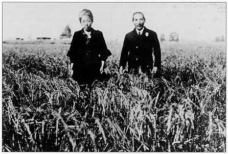 takasuka rice field.jpg