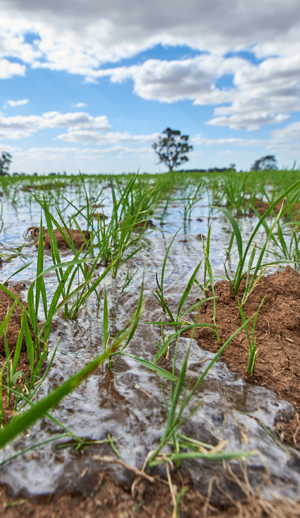 SunRice are world leaders in water efficiency and use 50% less water to grow rice than the global average -