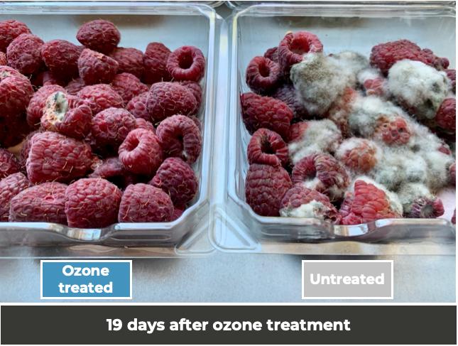 Ozone_generator_for_food_safety_of_berries.png