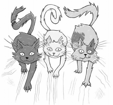 illustrations by Rachel Sanson