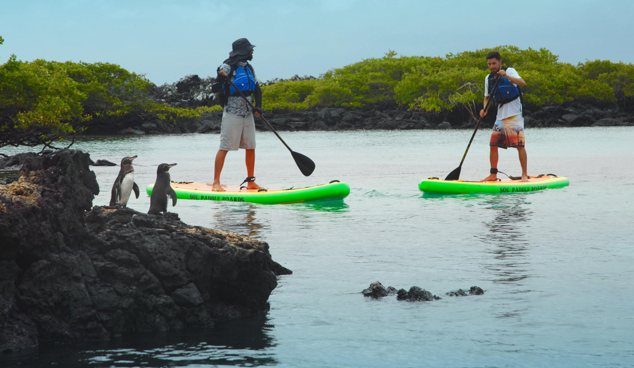book tours to Galapagos SUP paddle galapagos Islands best honeymoon adventure destination romantic wildlife best  adventure tour.jpg