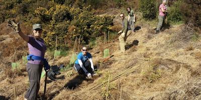 Rameka planting 4_cropped.png