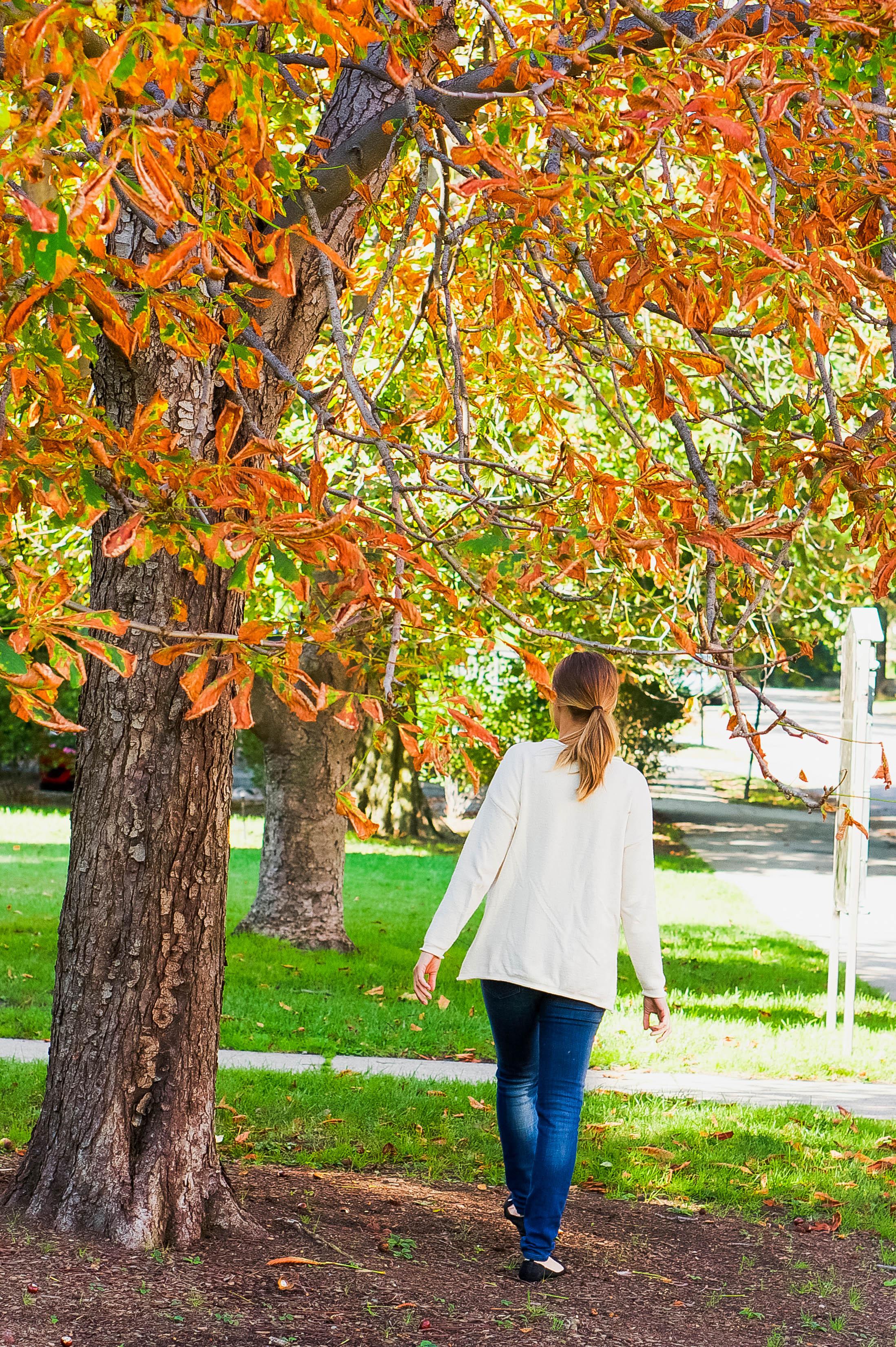 Fall Walk 2.jpg
