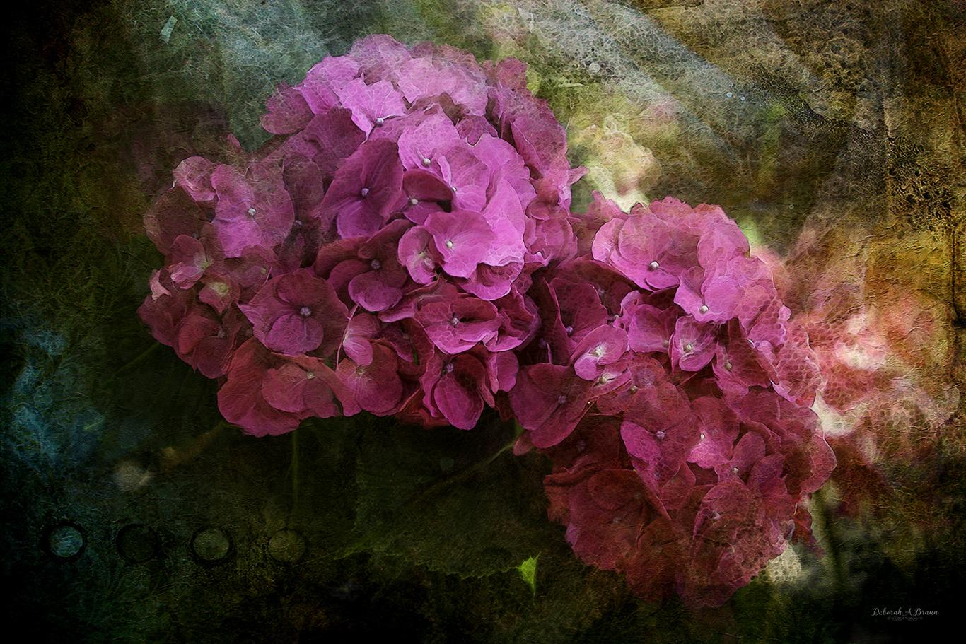 Hydrangeas.jpg