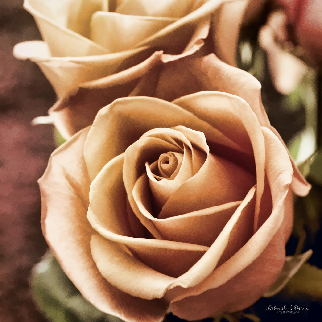 Rose Glow.jpg