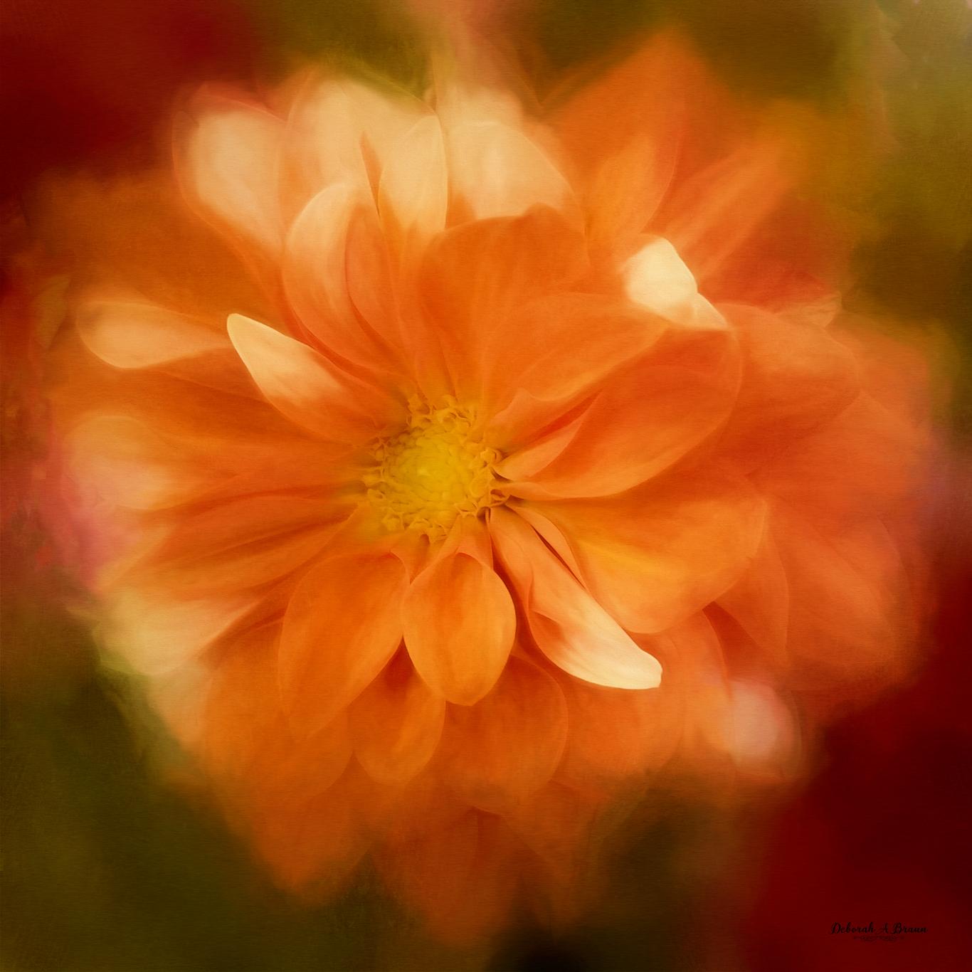 Orange-Dahlia.jpg