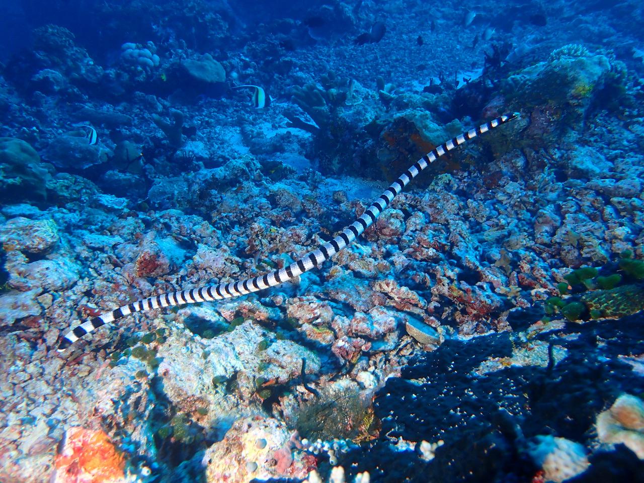 @akas_wakatobi from Wakatobi Dive Adventures