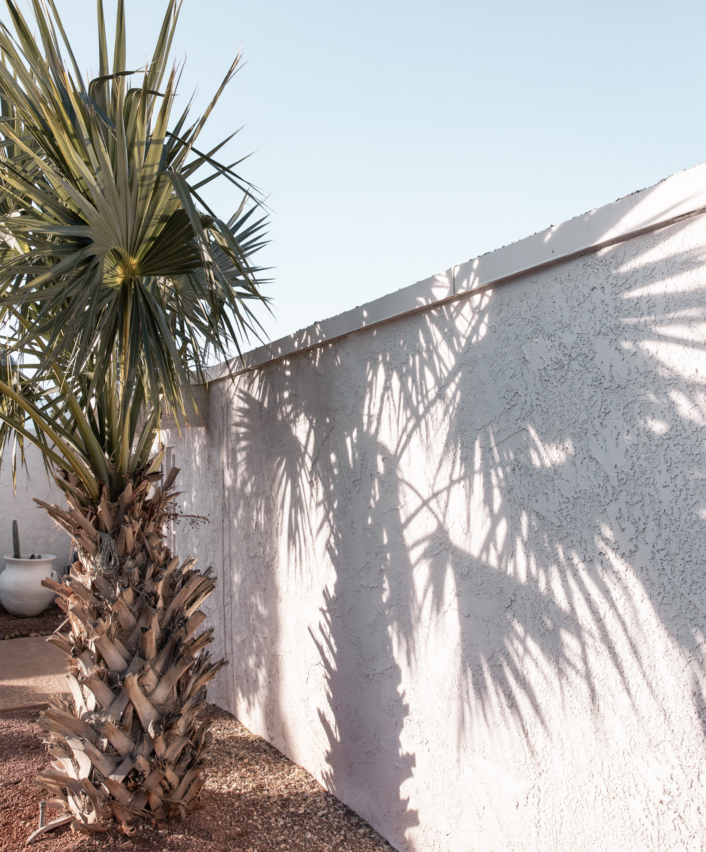 palm shadow.jpg