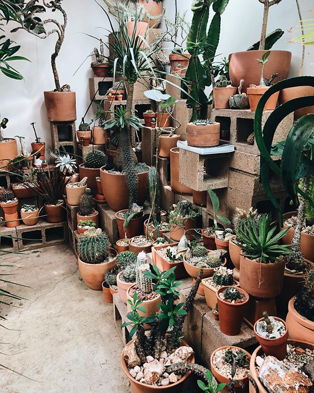 i love cacti, i love sundays & i love when @zinzi29 visits. all three loves happening all at once? it's *almost* too much for me to handle 🌵 #heartexplosion