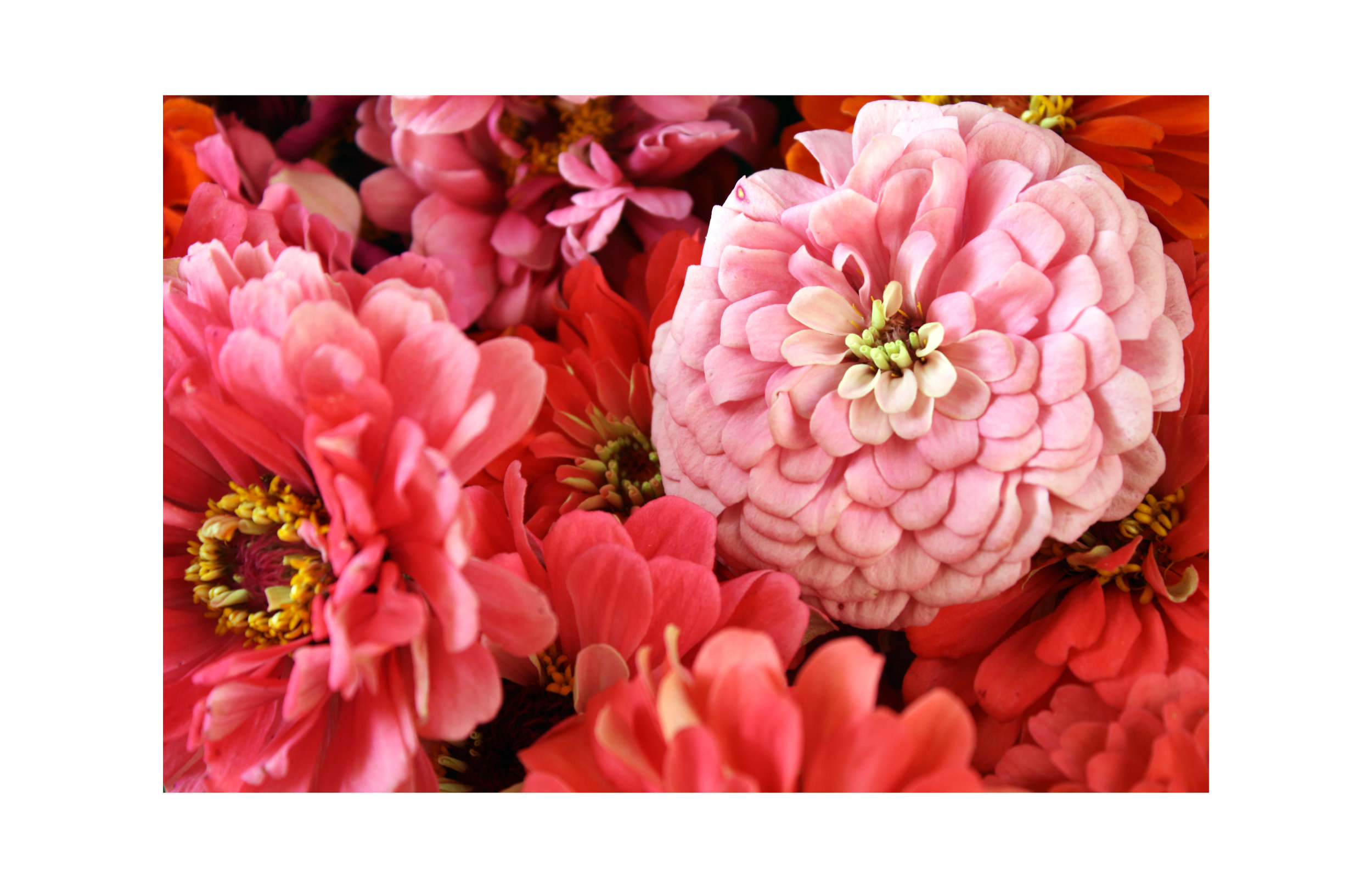 Tori Twine pink flowers 11x17.jpg