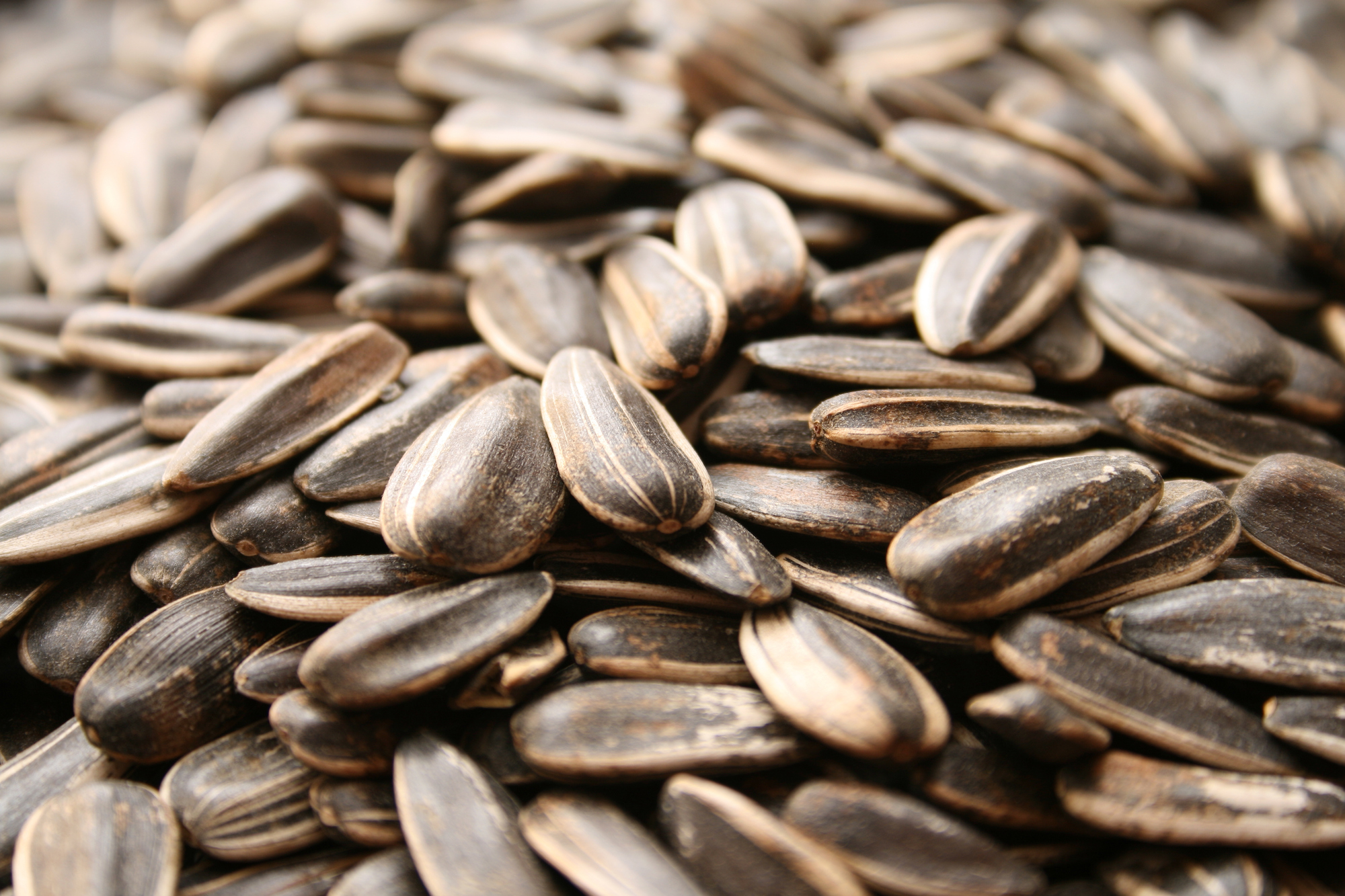 seeds and grain_sunflower seeds_iStock-157292820.jpg