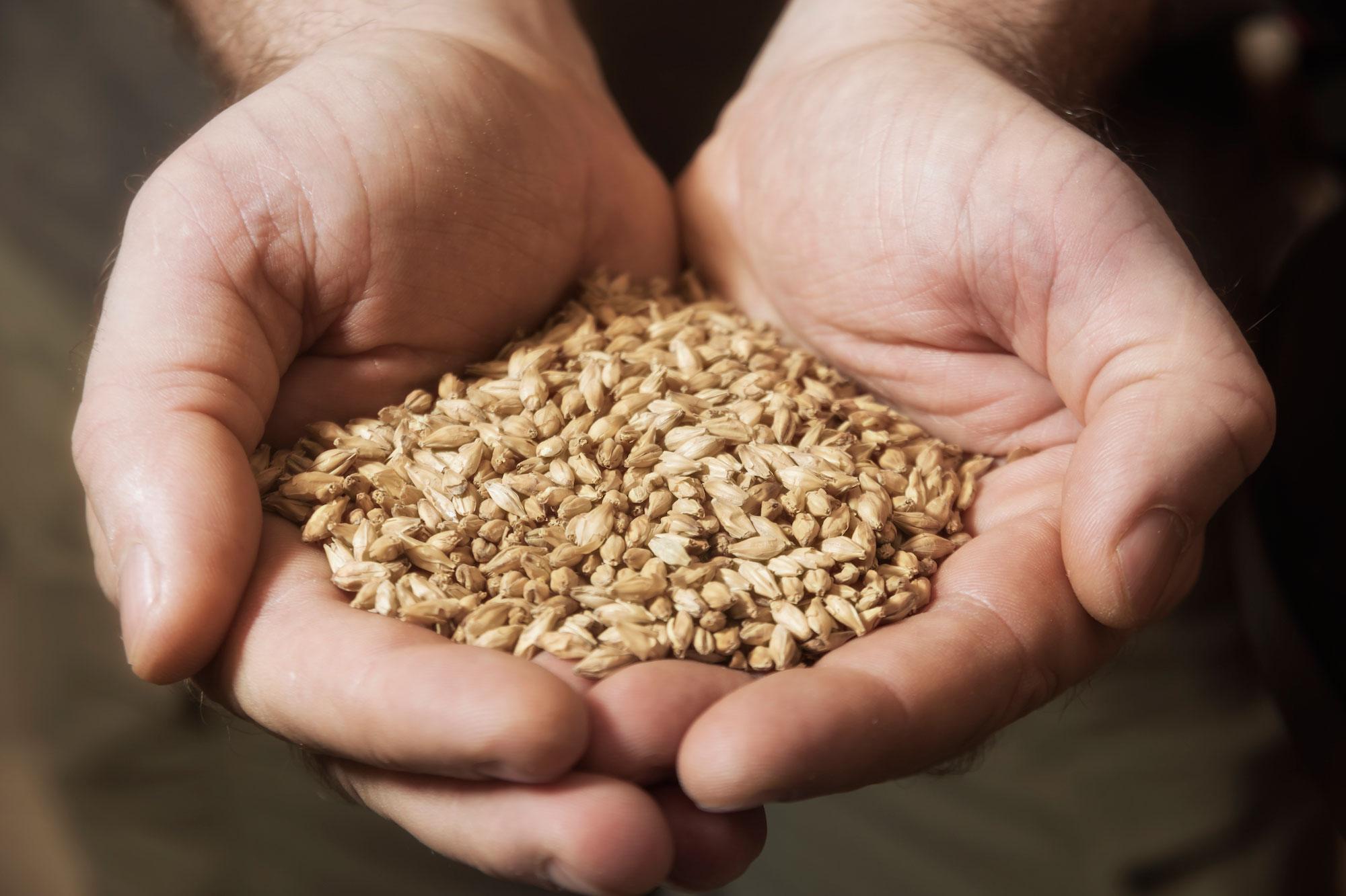 seeds-and-grain_in-hands_iStock-873635416.jpg