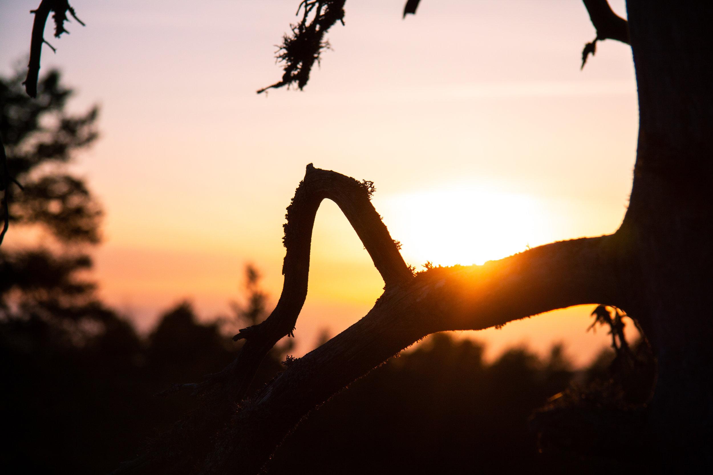SolnedgångSkog.jpg