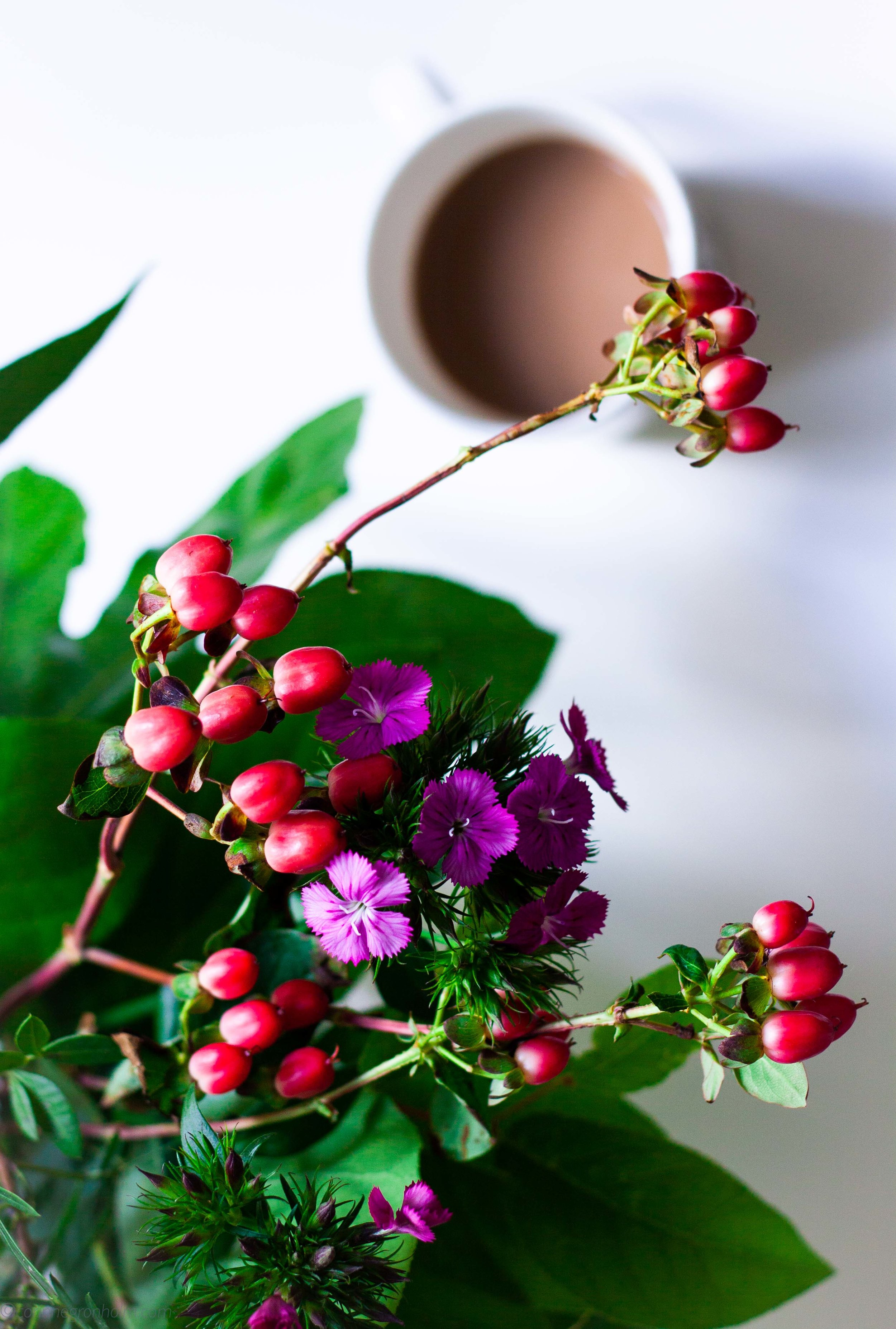 kaffeblommorblogg.jpg