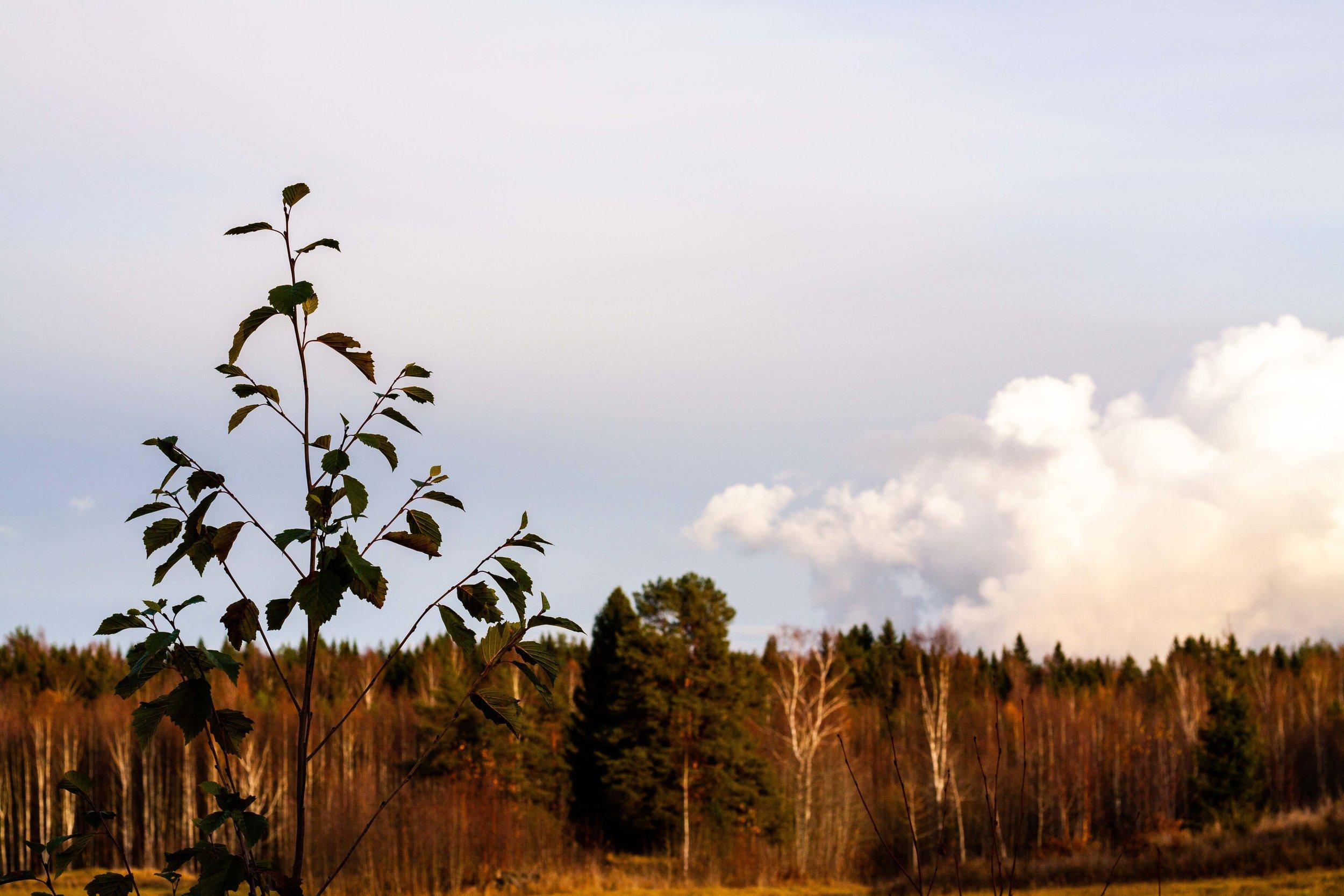 En av alla bilder jag tagit under höstens gång. Gillar det vackra i den lite gråaktiga men ändå gyllenbruna verkligheten.