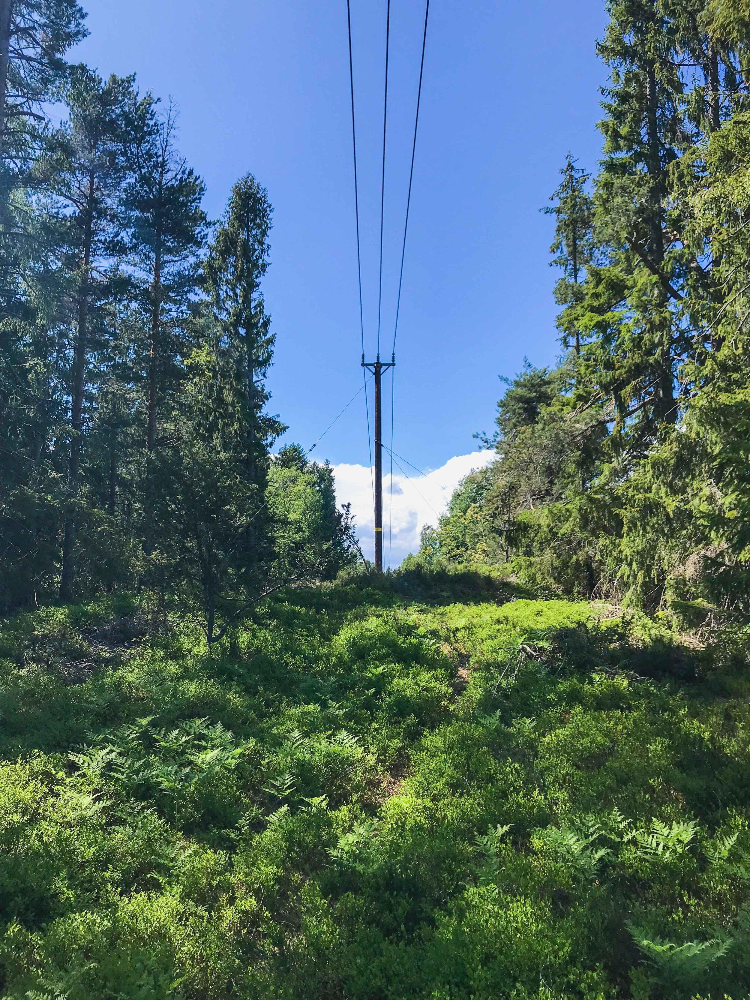 skog-7772.jpg
