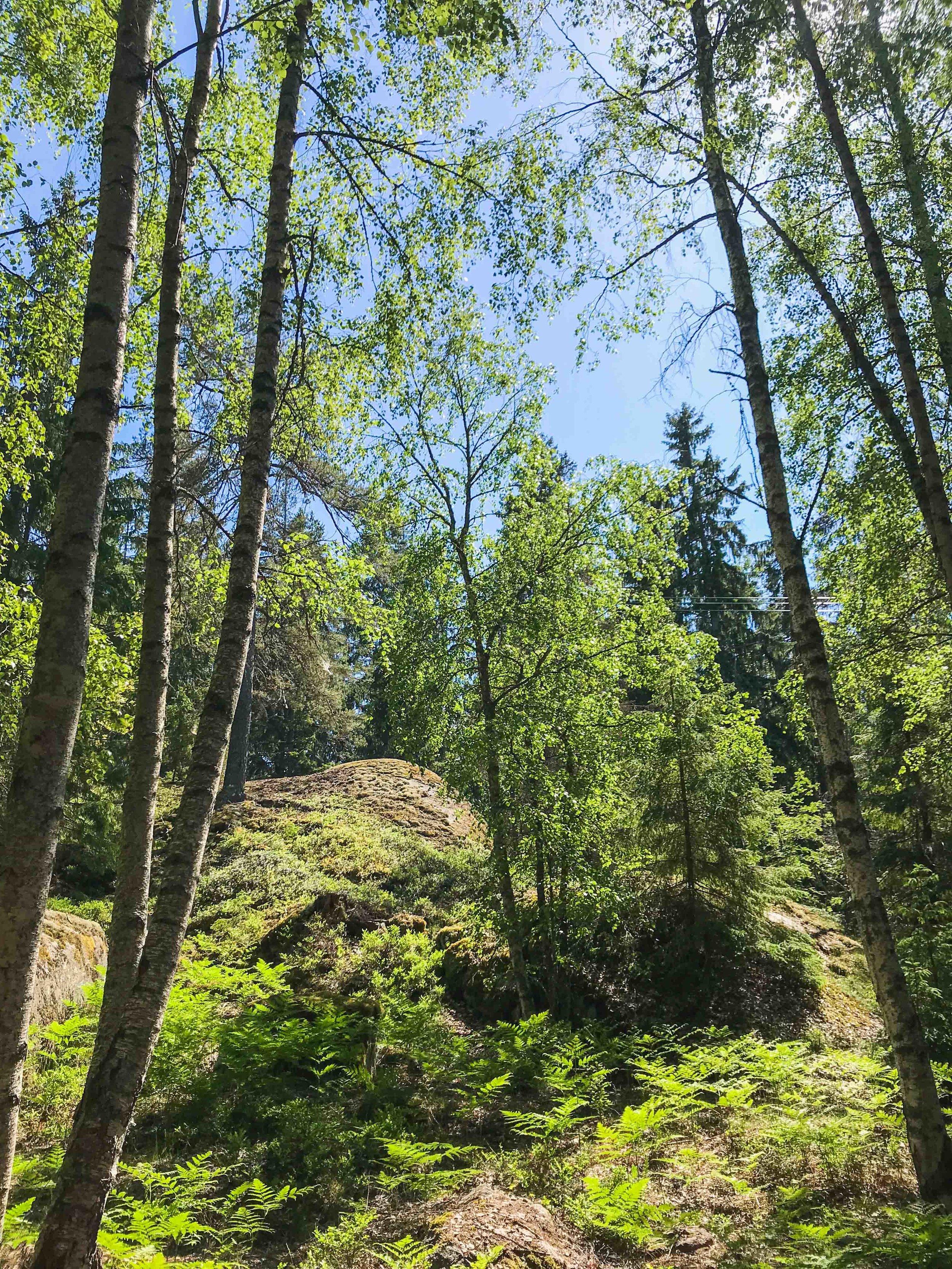 skog-7769.jpg