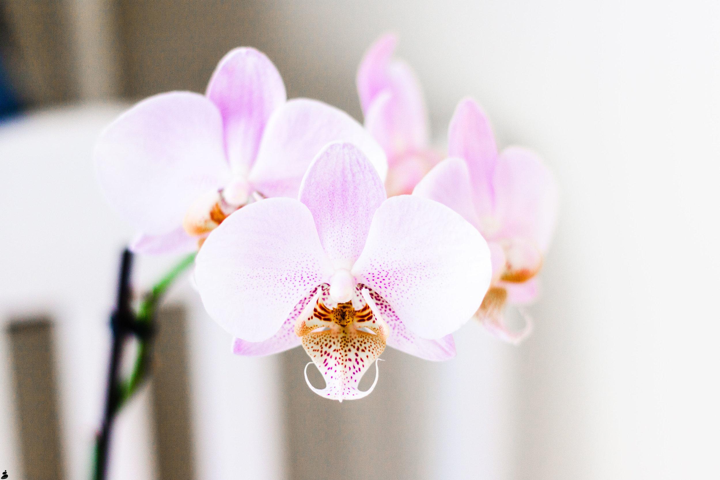 orkidecorinnegronholm-2962.jpg