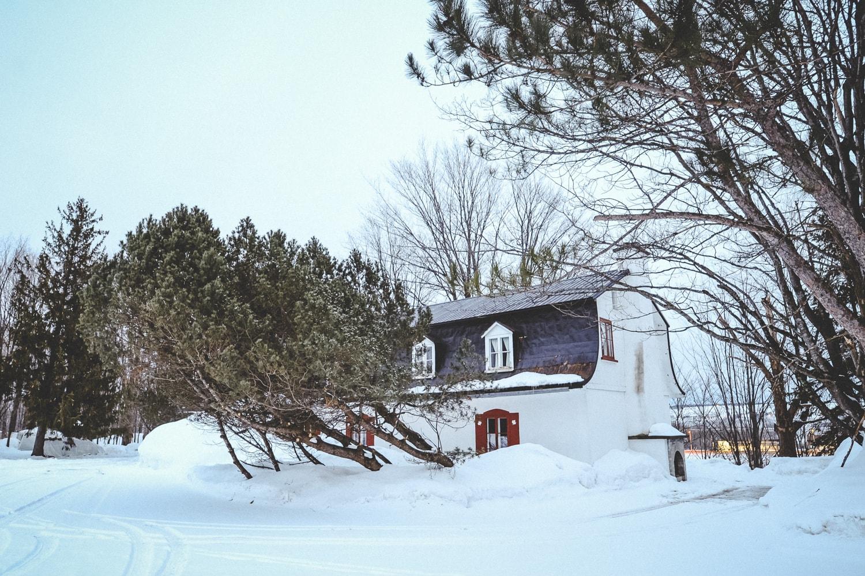 Snowy Backyard .jpg