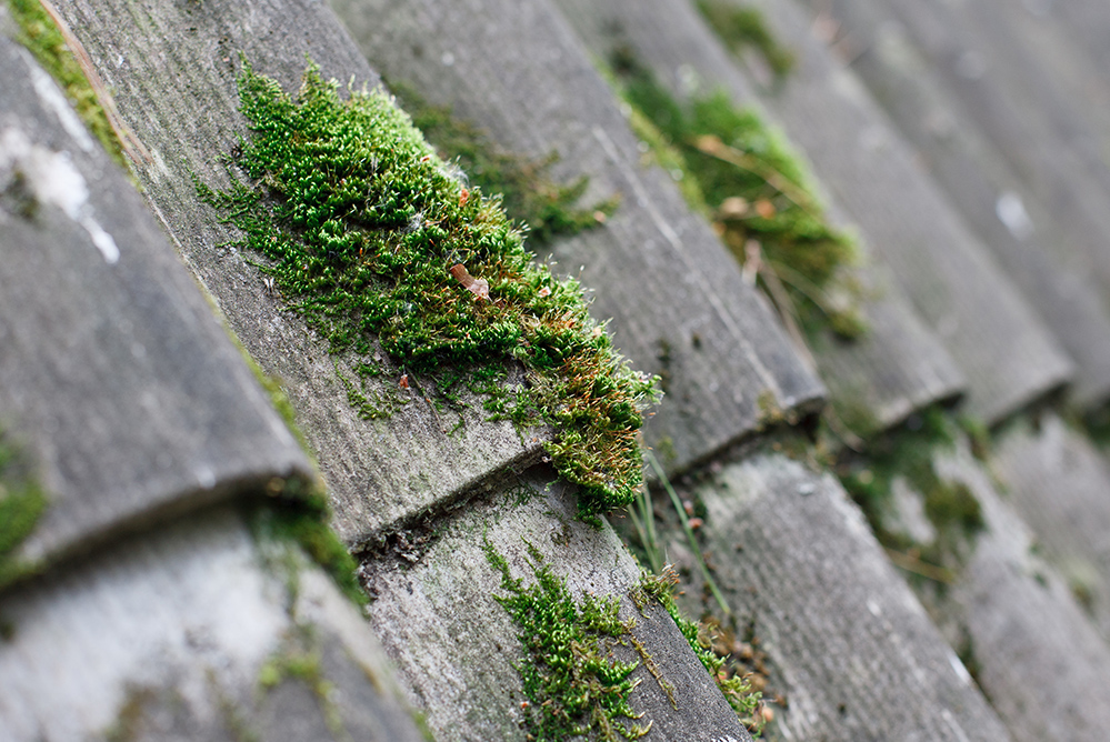 Evergreen Roofing - Moss Removal