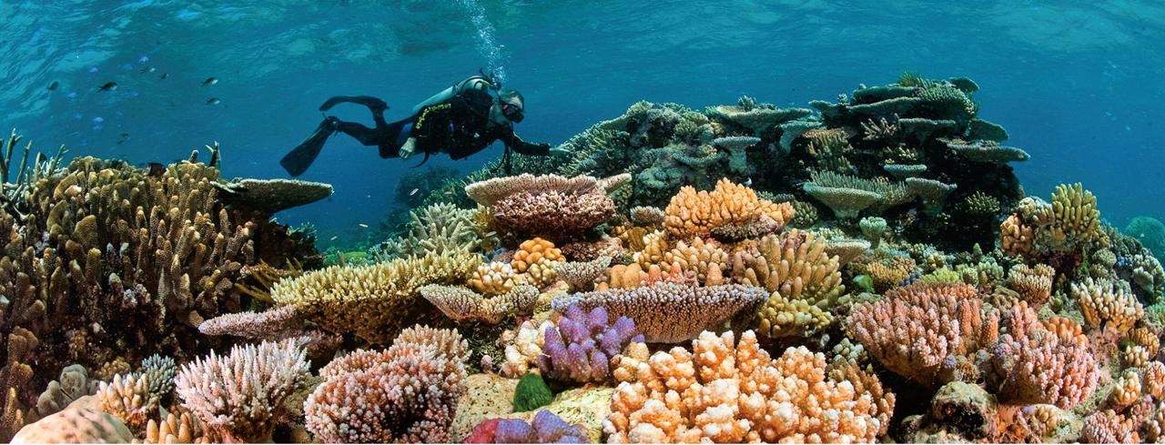 beautiful coral reef.jpg