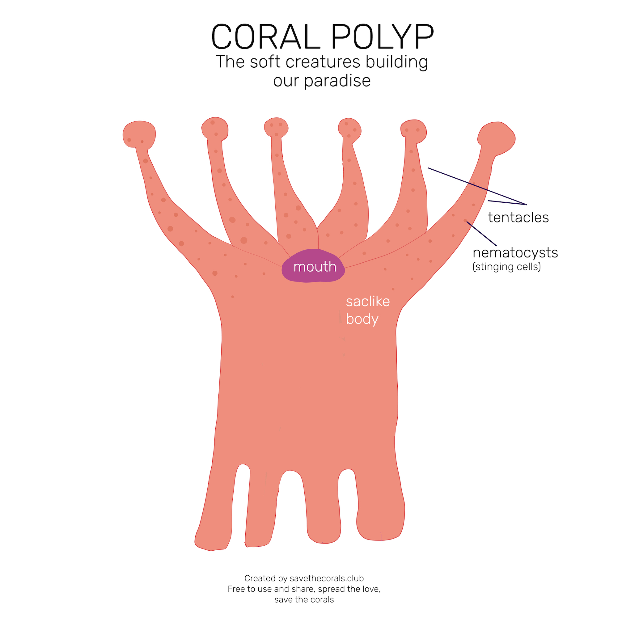save-the-corals-polyp-diagram-outside_coral polyp on the surface.jpg