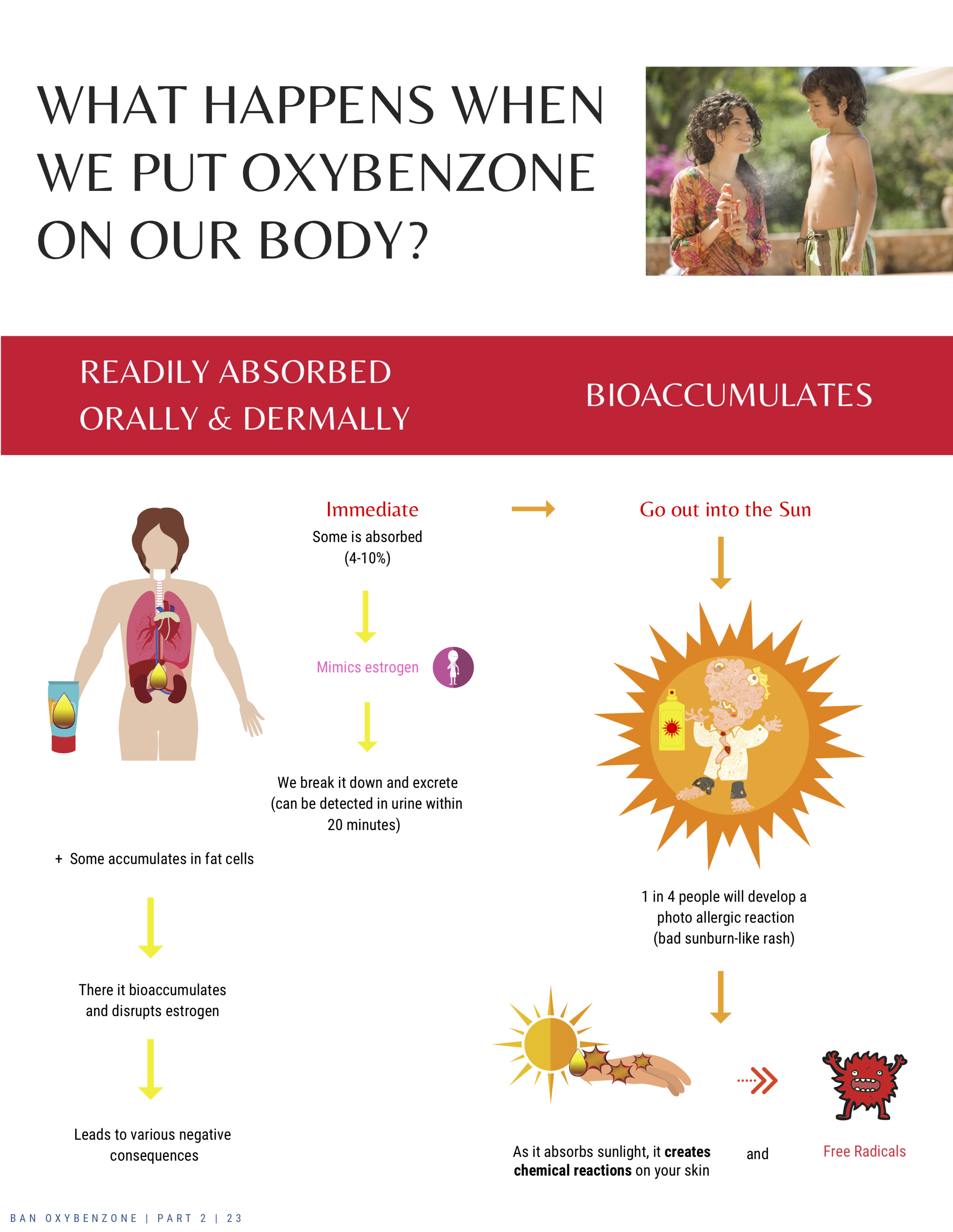 ban-oxybenzone-part-2-what-happens-when-we-put-oxybenzone-on-the-body-23.png