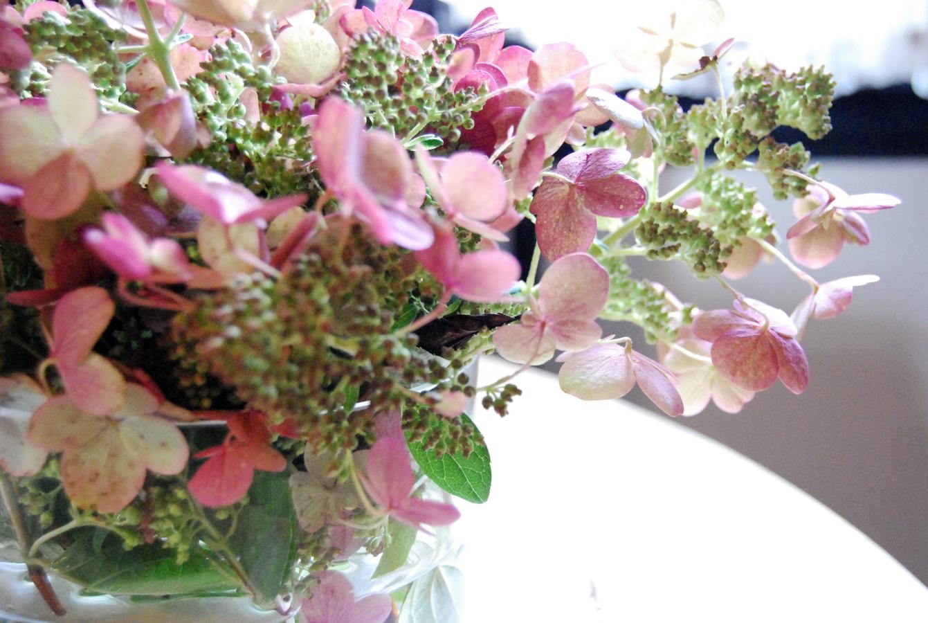 hydrangeaflowers.jpg