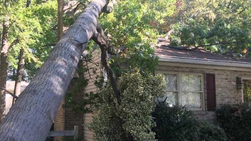 Storm Damage Cleanup -