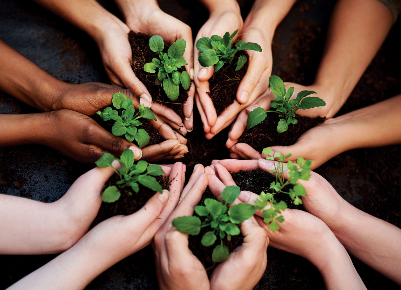 Grow with Us!    Help us replant and protect our environment for everyone's enjoyment!    make a donation
