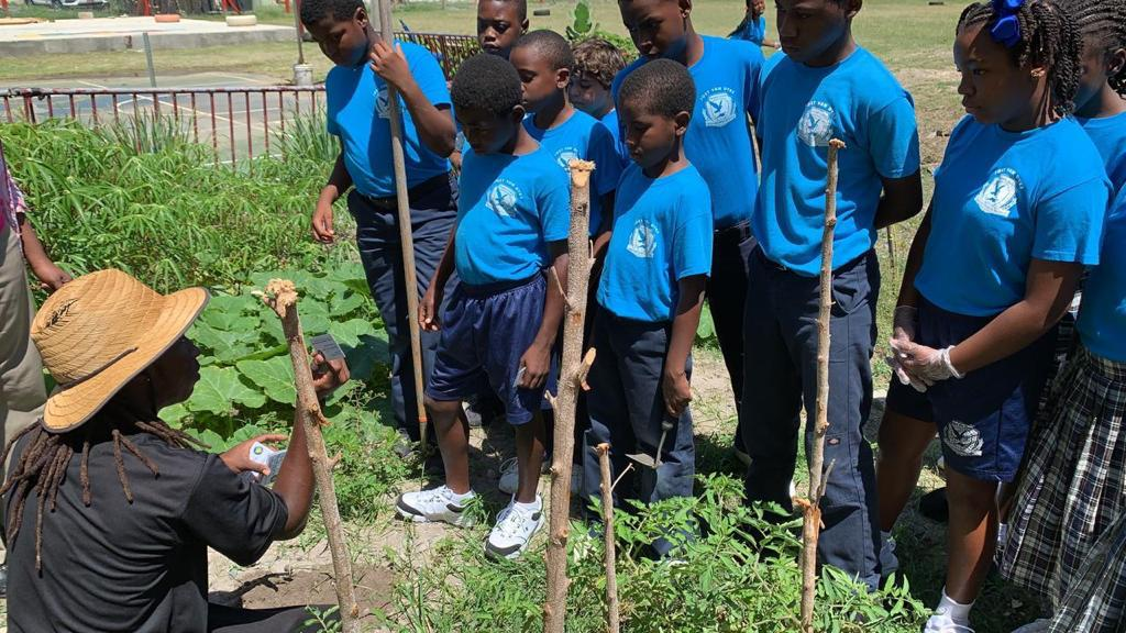 School planting at Jost Van Dyke Primary School for Earth Day.