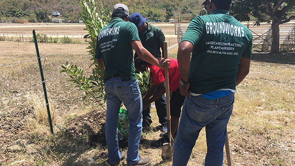 Planting White Cedar trees at the Ellis Thomas Downs Racetrack in Sea Cow's Bay, Tortola