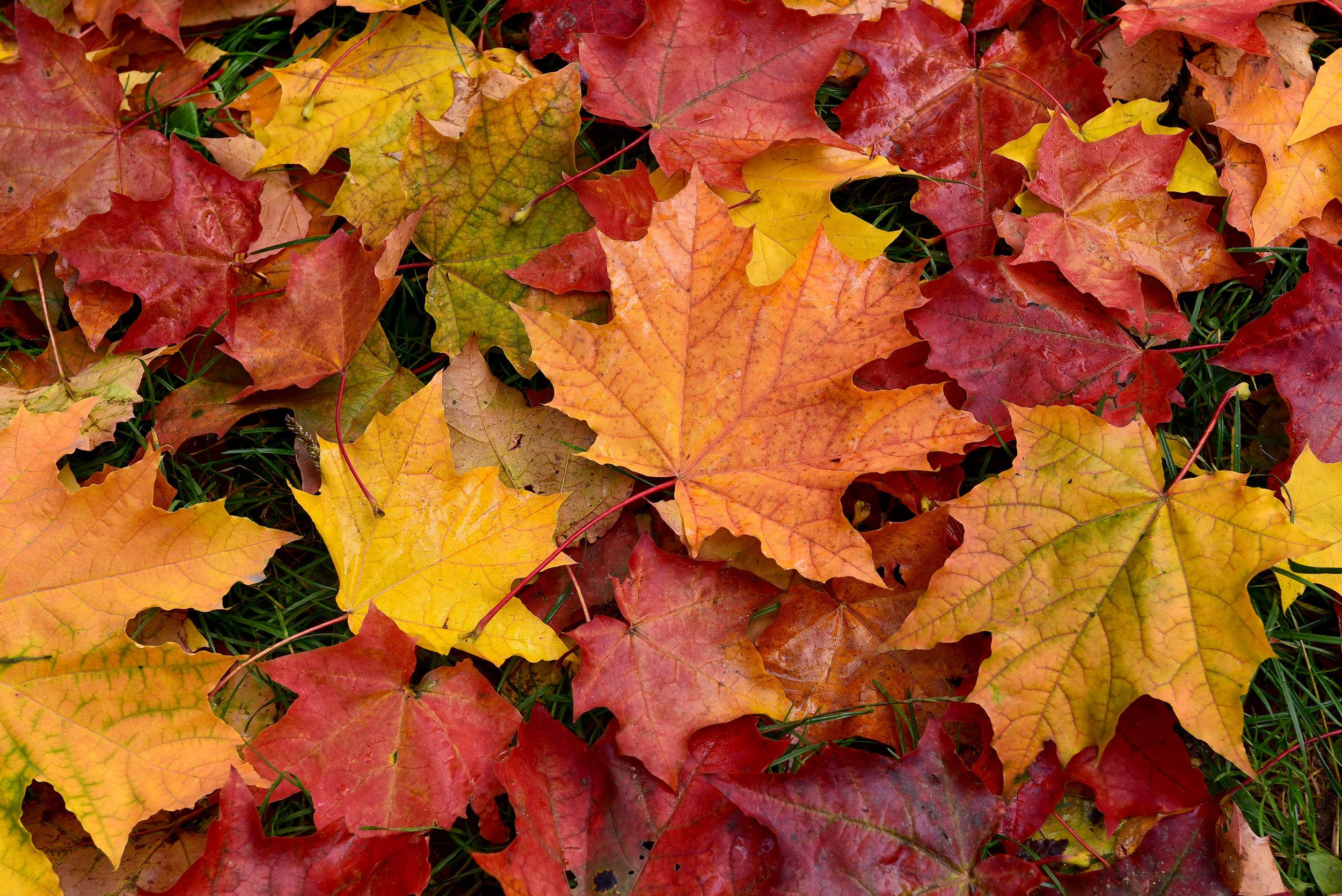 Seasonal Tips for Fall